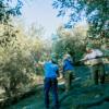 Kép 3/5 - PARQUEOLIVA extra szűz olívaolaj 3000ml fémdobozos